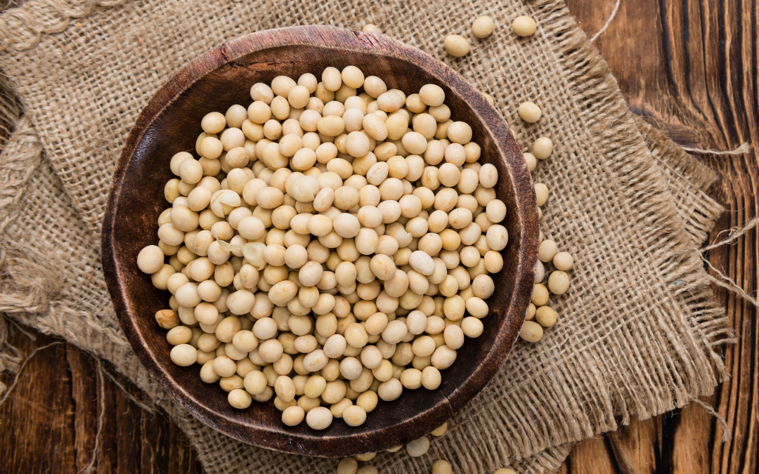 soy beans which are strong phytonutrients